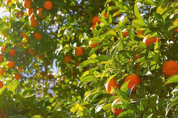 beneficios-riesgos-naranjas