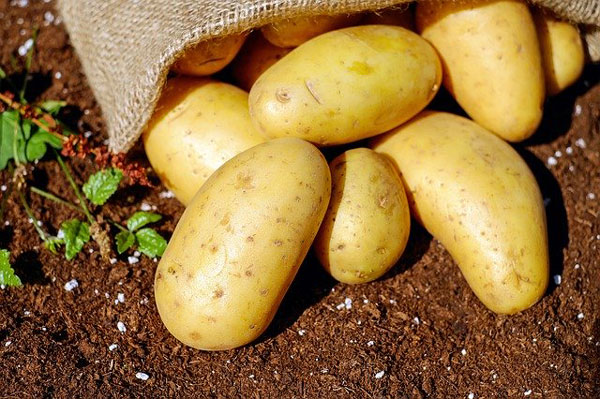 Las patatas y las hortalizas